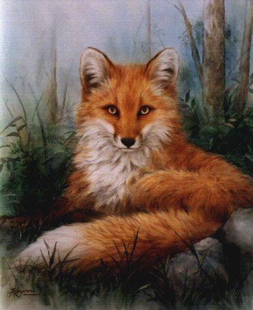Belles images d'animaux