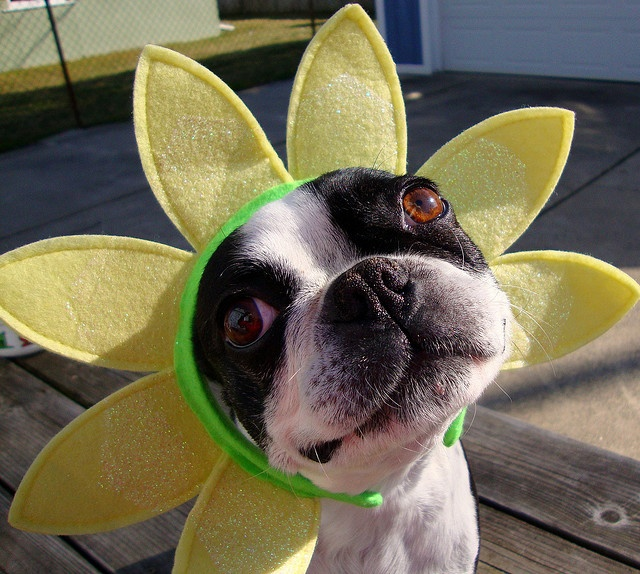 """Like I'm not cute enough already - they put this daisy thing on me!"""