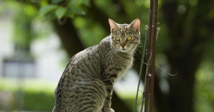 Wer regelmäßig Katzen-Besuch im Garten hat, wird sich früher oder später über die kleinen Katzenkot-Haufen in den Beeten ärgern. So vertreiben Sie die Stubentiger dauerhaft.