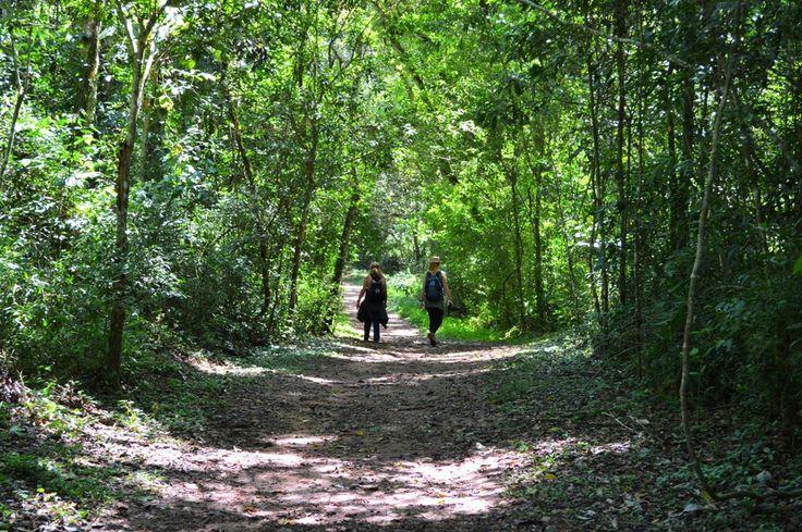 Misiones - Puerto Iguazú #Litoral #Verde #Selva #Misiones