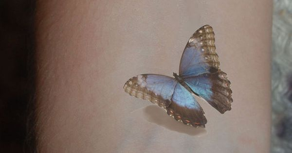 Blue Morpho Butterfly 3d Tattoo WickedlyLovely Skin Art