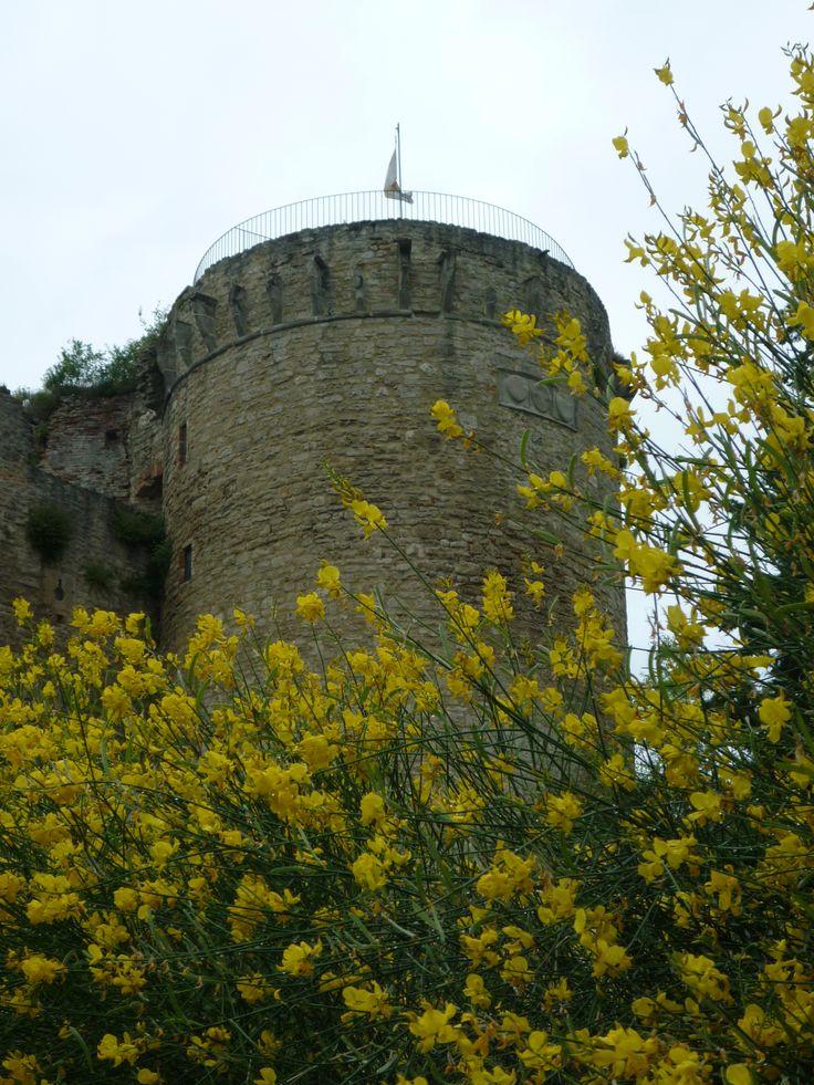 La fortezza e le ginestre in fiore
