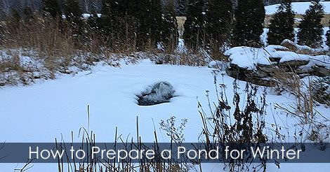 12 best images about pond building steps on pinterest for Fish pond preparation