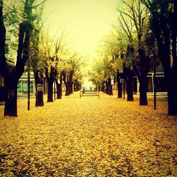 #autumn #vignola