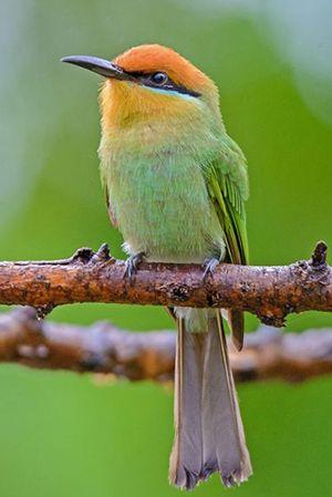 Birding resources - Bird Watching,Resources for Bird Watching by the Fat Birder