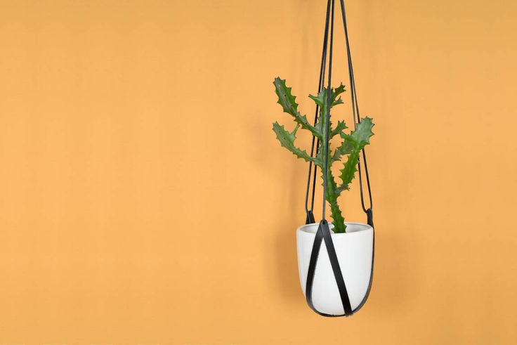 lade 1 black leather hanging planter