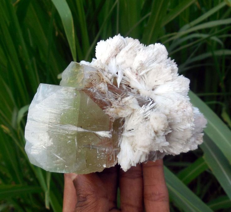 "Green ""APOPHYLLITE"" Cube W/ SCOLECITE SPRAY Natural Specimen From India B-5"