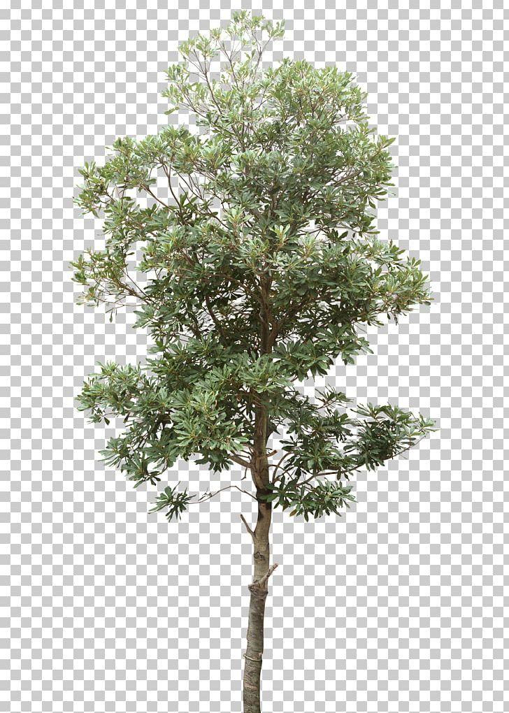 Tree Computer File Png Autumn Tree Branch Christmas Tree Computer Graphics Data Tree Plan Photoshop Tree Photoshop Tree Plan Png