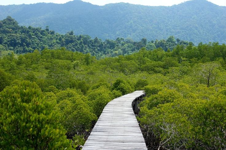 Koh Chang Mangroves