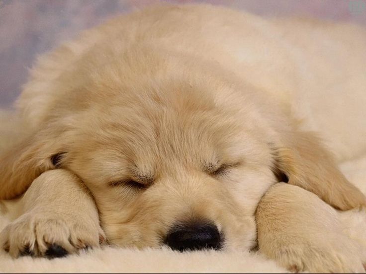SLEEPY PICTURES | sleepingpuppy