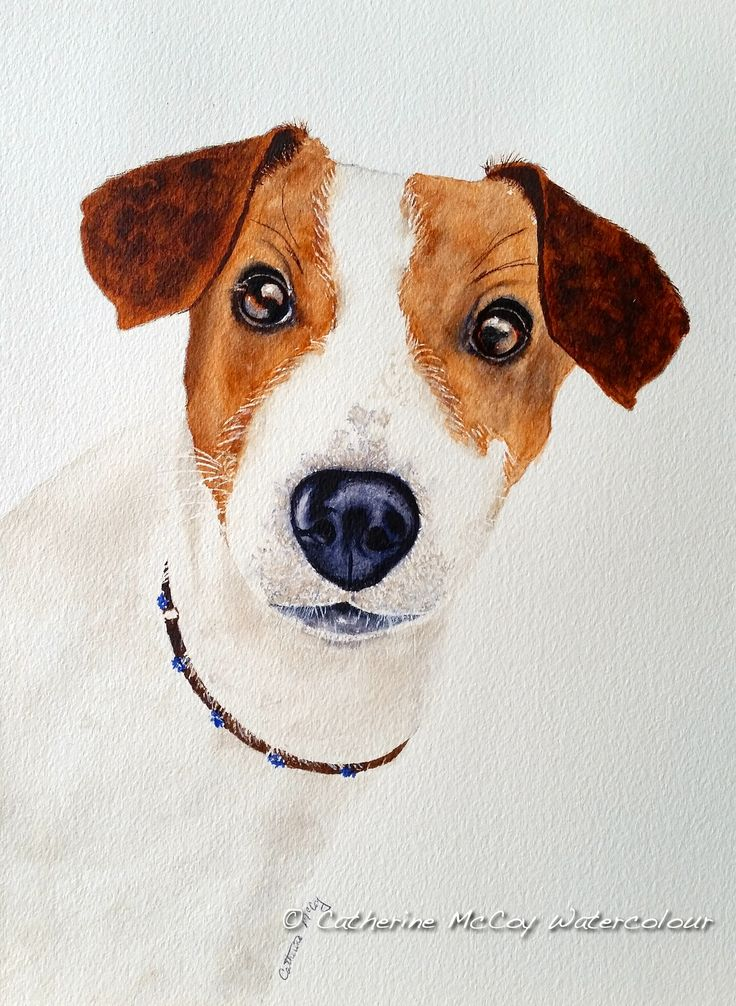 """Jack! Watercolour 8"""" x 10"""" by Catherine McCoy"""