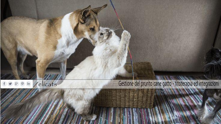 Gestione del prurito cane gatto fitoterapia ed integrazioni via @elicats