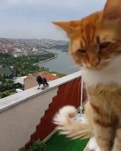 14 Cat Adoption Photos That Will Definitely Melt Your Heart – Katzen fotos