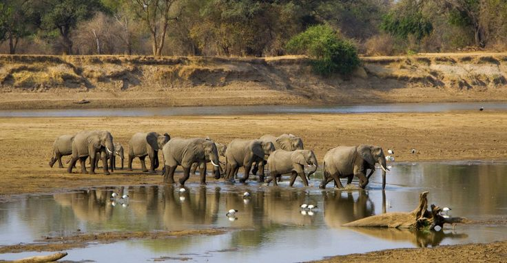 Elephants: about a 4% incidence of cancer despite way more body mass and comparable life span to humans. Why?According to this just published JAMA study, elephants have 20 copies of tumor suppressor gene P53. In comparison, humans have just 2, and have cancer rates of about 11-25%. Arguably , humans are exposed to more carcinogenic…  http://www.drkarafitzgerald.com/2015/10/10/potential-mechanisms-for-cancer-resistance-in-elephants-and-comparative-cellular-response-to-dna-damage-in-humans/