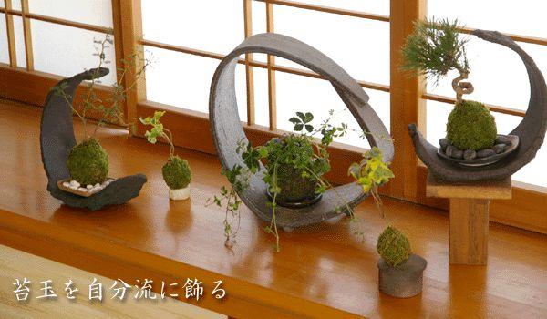 Kokedama (moss ball) Bonsai