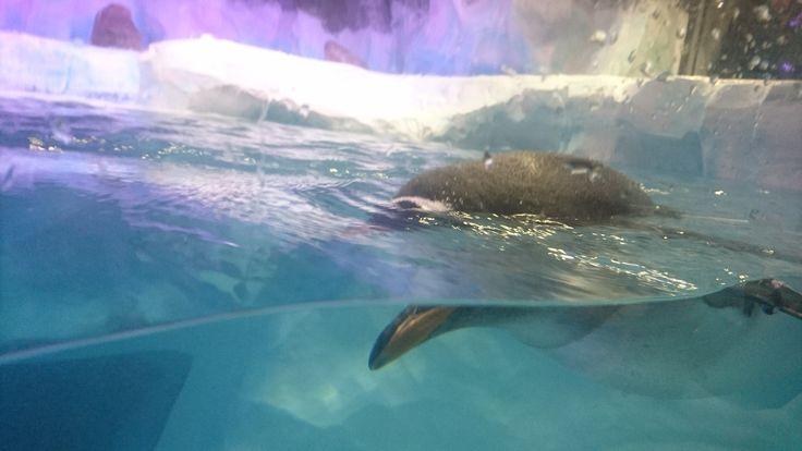Scoptophobia?  National Sea Life Centre, Birmingham