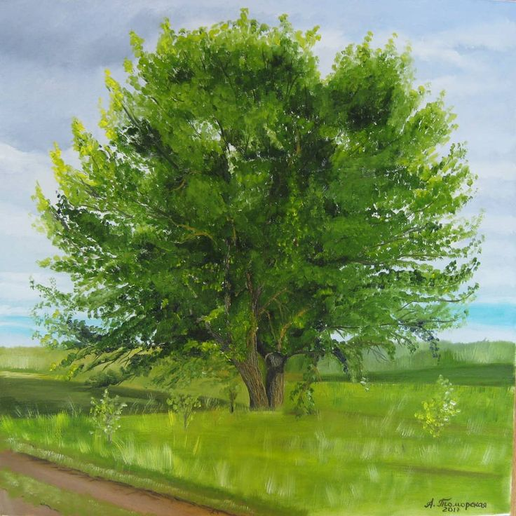 """""""The Oak.""""Original Oil Painting on Canvas. 50,8 х 50,8 cm. 20"""" x 20"""". 2017. Unframed. AVAILABLE FOR IMMEDIATE PURCHASE. Ready to hang. Painted edges.    This is an ORIGINAL oil painting on a wrapped stretched canvas.  #landscape #landscapepainting #oilpainting #oak #giftsforher #green #greenery"""