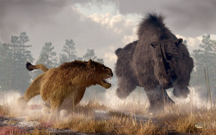 A rogue male cave lion (panthera leo spelaea) has wandered too close to a grazing woolly rhino (coelodonta antiquitatis)