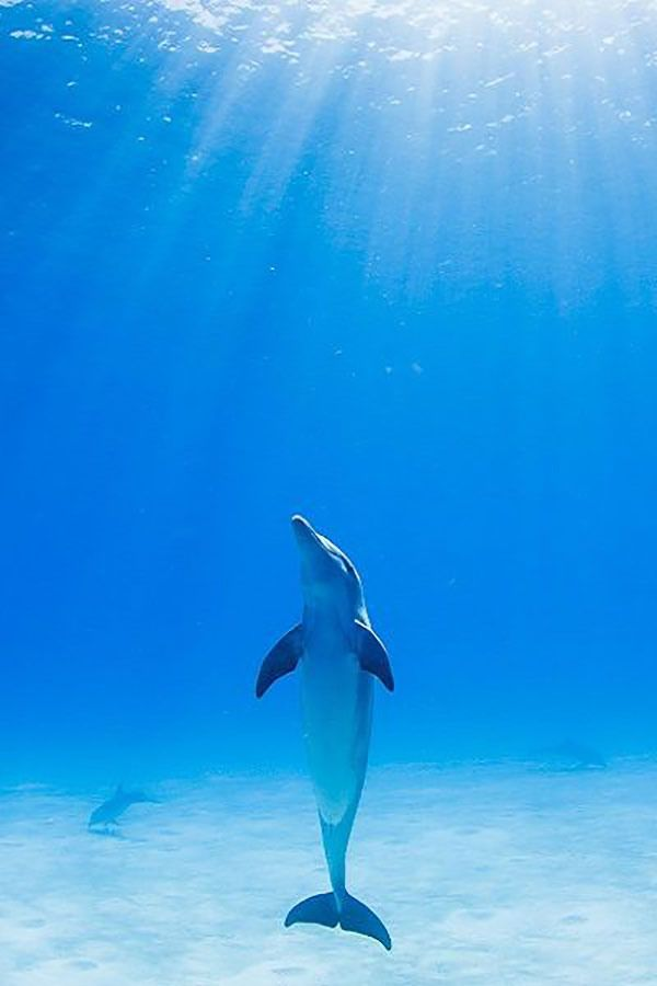 Beautiful photo by Lazaro Ruda.