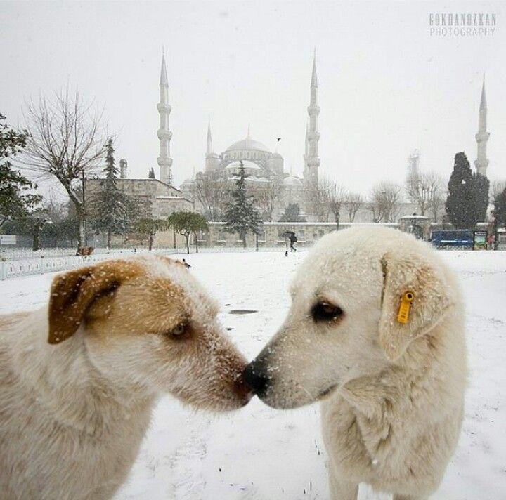 Istanbul da kış