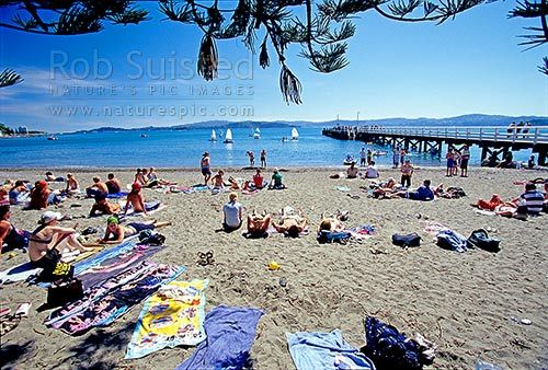 Summer visitors to Days Bay Beach and wharf. Eastern Wellington Harbour, Days Bay, naturepic.com