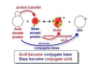 acid base catalysis bronsted relationship