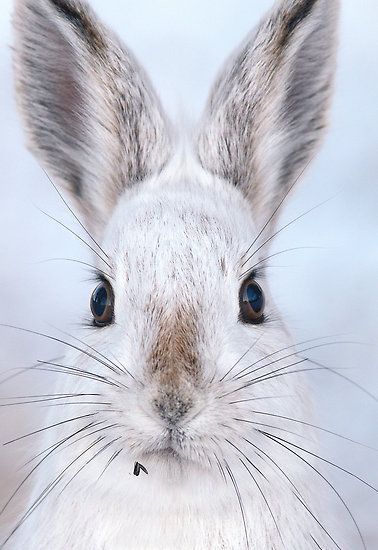 Beautiful whiskers on a snowy bunny – Zeichnungen Ostern