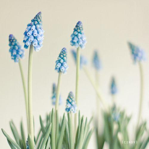tinywhitedaisies:    prettylittleflower:    62/365… (via {cindy})