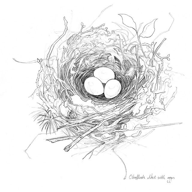 Картинки раскраска гнездо