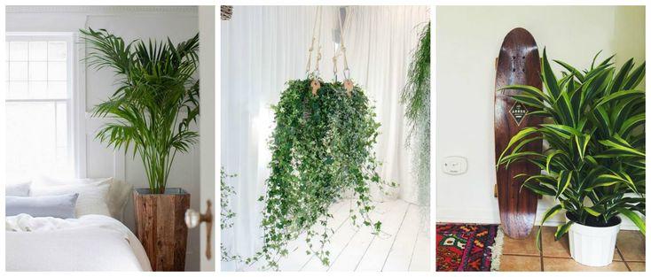 Handig: deze planten zijn mooi én zuiveren de lucht