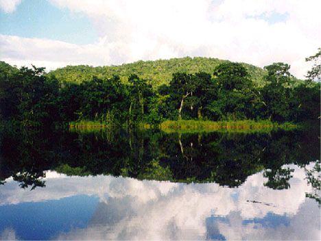 Rainforests Plants. Includes link to website with description of different plants.