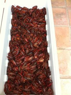 This is how I boil/cook crawfish. There are 100s of ways to do it, this is just one. I have tried many different ways, and found this way to be the best for me. Most recipes for making crawfish make the crawfish spicy on the outside, not the inside. The recipes do this by just adding more spices on top of the crawfish after they are cooked. Many restaurants do this. This is WRONG! Crawfish should be spicy in you mouth not on your lips. This technique will give you really juicy…