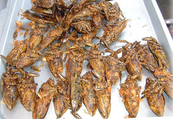 Гигантские водяные жуки