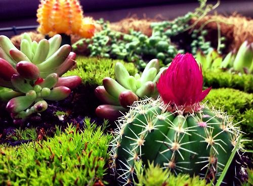 Cactus with flower terrarium