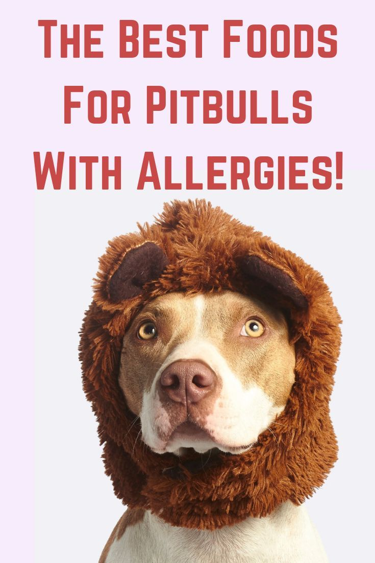 Best dog food for pitbull with allergies best dog food