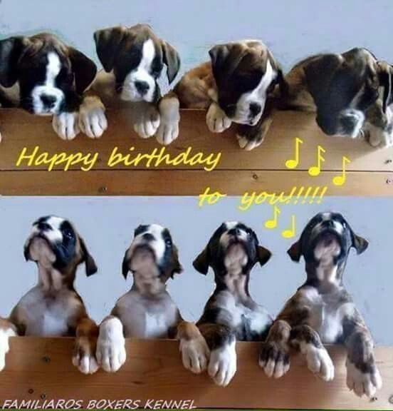 """94 Best Images About BOXERS (""""BIRTHDAYS"""") ....... On"""
