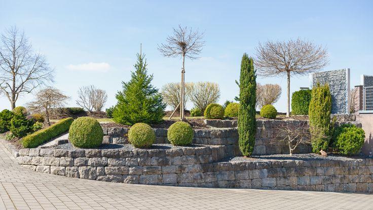 Iglaki w przestrzeni publicznej – jak o nie dbać? | Inspirowani Naturą | how to take care for evergreen trees in cities?