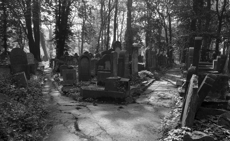 #Cemetery alleys #Krakow