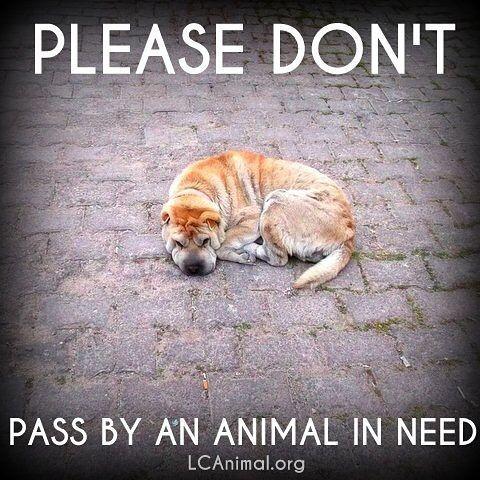 Please don't pass by an animal in need. #helpinganimals #animalwelfare #adoptdontshop: