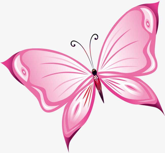 Butterfly outline pink. Hand painted clipart beautiful