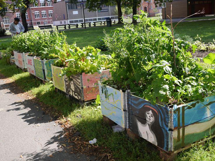 Munch-inspirasjon og urban dyrking i Gamle Oslo / 2014 / Nyheter / Forside - Sparebankstiftelsen