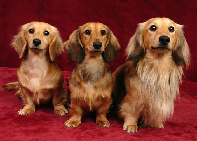: Weiner Dogs So, Funny Dogs, Cute Adorible Weird Animals, Dachshunds Doxies, Doxie Loading, Things, Doggone Funny, Wiener Dogs, Devoted Doxies