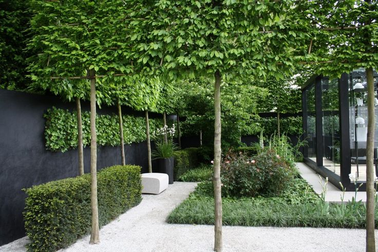 Pleached trees could make an interesting border in the garden and would give a bit of privacy.