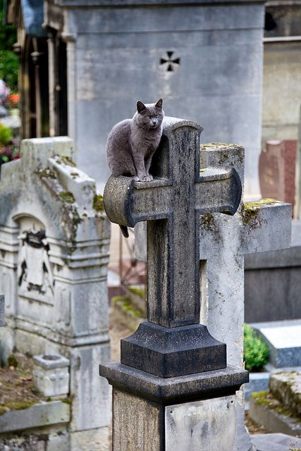 Grave-yard cat. by SeattleSandro, via Flickr