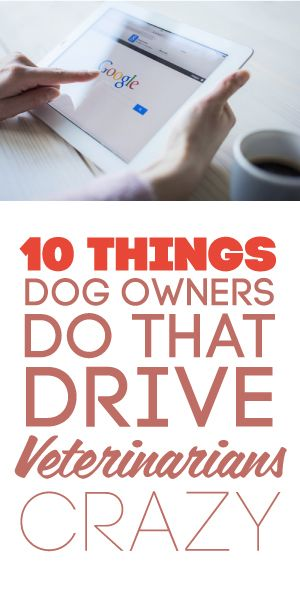 10 Things Dog Owners Do That Drive Veterinarians Crazy!