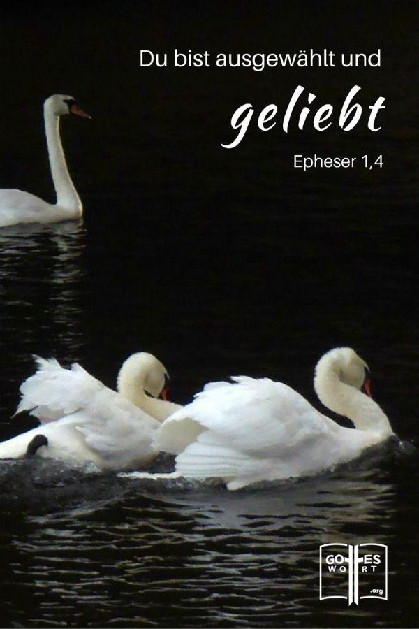 Geboren für so einen Tag: Als Christen leben wir nicht für uns alleine sondern auch für unsere Mitmenschen. Epheser 1,4 http://www.gottes-wort.com/geboren.html