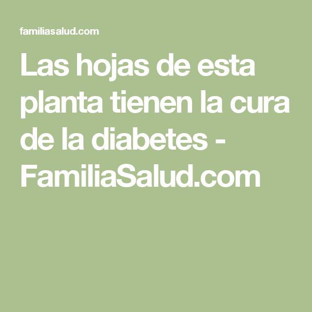 Las hojas de esta planta tienen la cura de la diabetes - FamiliaSalud.com