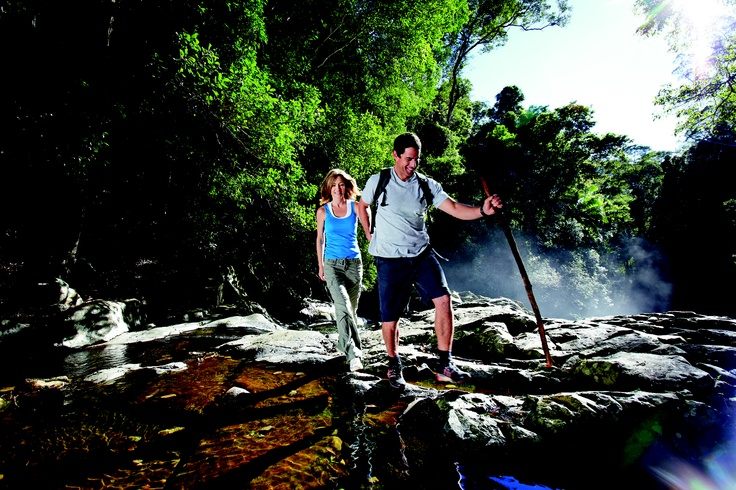Here's the answer for today's #gcfuncation quiz! We're hiking in Springbrook National Park #GoldCoast #travel