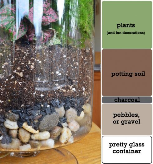 terrarium DIY - link is no good but pic shows layer order well