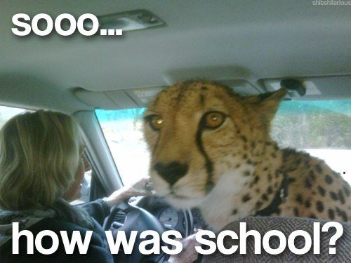 : Big Cat, Cheetahs, Schools, Funny Animal Pics, Funny Pictures, Animal Humor, Pet, Funny Stuff, So Funny